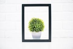 在画框里面的植物 免版税库存照片