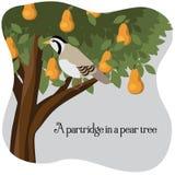 在洋梨树的一个鹧 向量例证