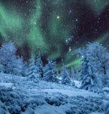 在冻森林的极光 免版税库存图片