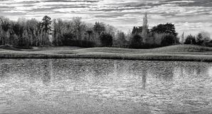 在冻池塘,都伯林,爱尔兰的鸟 免版税图库摄影