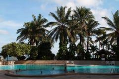 在水池旁边的椰子树 库存图片