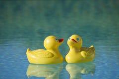 在水池的塑料鸭子 免版税库存照片