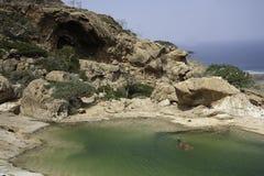 在水池的当地Socotran游泳在岩石,索科特拉岛,也门, 2014年2月,第12, 库存照片