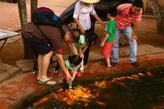 在水池的旅游饲料金鱼 免版税库存照片