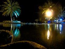 在水池的棕榈 免版税图库摄影