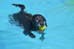 在水池的狗 库存图片