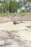 在水池的水牛城家庭 免版税图库摄影