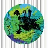 在水池的黑白的鸭子 免版税图库摄影