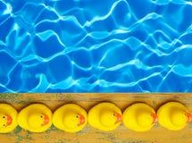 在水池附近的橡胶鸭子 免版税库存照片