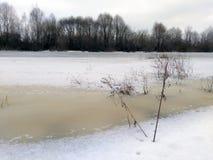 在冻河烘干植物 图库摄影