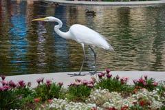 在巴波亚公园的可爱的鸟 图库摄影
