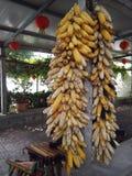 在水泥专栏垂悬的玉米 图库摄影