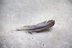 在水泥地板上的一根羽毛 免版税图库摄影