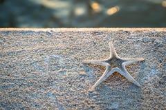 在水泥地板上的海星 库存图片