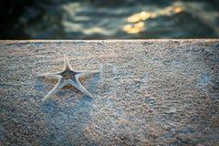 在水泥地板上的海星 免版税库存照片