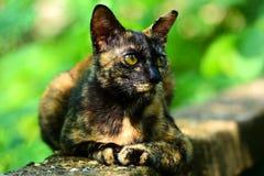 在水泥地板上的猫 免版税库存图片