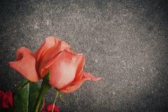 在水泥地板上的玫瑰 库存照片