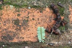 在水泥地板上的罗望子树腐烂 库存图片