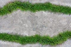 在水泥地板的草 免版税库存图片