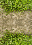 在水泥楼层上的酢浆草作为框架 库存照片