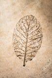 在水泥的浅浮雕叶子 免版税库存照片