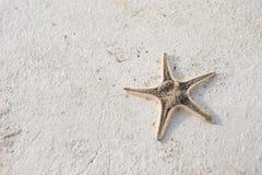 在水泥的海星在海附近 免版税库存照片