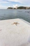 在水泥的海星在海附近 图库摄影