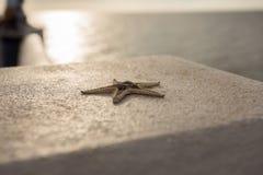 在水泥的海星在海附近 免版税图库摄影