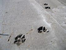 在水泥的脚印。 免版税图库摄影