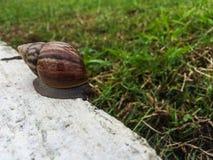 在水泥的蜗牛在庭院里 免版税图库摄影