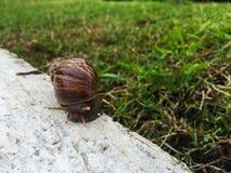在水泥的蜗牛在庭院里 免版税库存图片