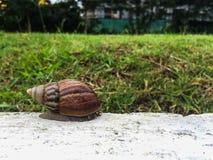 在水泥的蜗牛在庭院里 图库摄影