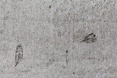 在水泥路面印的叶子 库存照片