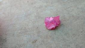 在水泥水泥地板上的一朵花 免版税库存照片