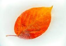 在冻浪端的白色泡沫的秋天叶子 库存照片