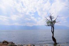 在洱海旁边的一棵树 免版税库存图片