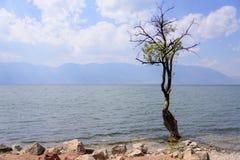 在洱海旁边的一棵树 免版税库存照片