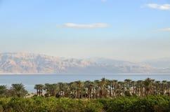 在死海附近的绿色绿洲。 图库摄影