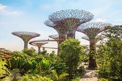 在滨海湾公园公园,新加坡的Supertrees 免版税库存照片