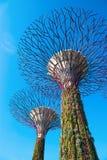 在滨海湾公园,新加坡的Supertrees 免版税库存照片