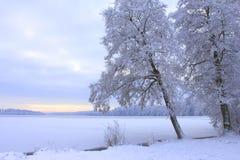 在冻湖的树 免版税库存图片