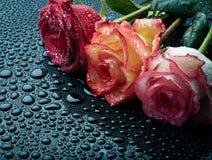 在黑湿背景的三朵玫瑰 免版税库存图片