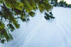 在冻灌木的冰柱 免版税库存照片