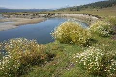 在水牛城叉子河, Moran,怀俄明河岸的夏天野花  免版税库存照片