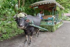 在水牛无盖货车的7月15,2017乘驾在别墅escudero,拉古纳, 库存照片