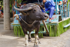 在水牛无盖货车的7月15,2017乘驾在别墅escudero,拉古纳, 库存图片