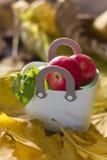 在购物塑料袋的秋天红色苹果 免版税库存图片