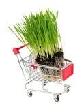 在购物车的新wheatgrass在白色 免版税图库摄影