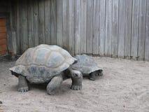 在默特尔海滩水族馆的乌龟 免版税库存图片