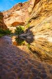 在水猎人峡谷供徒步旅行的小道默阿布犹他的反射 库存图片